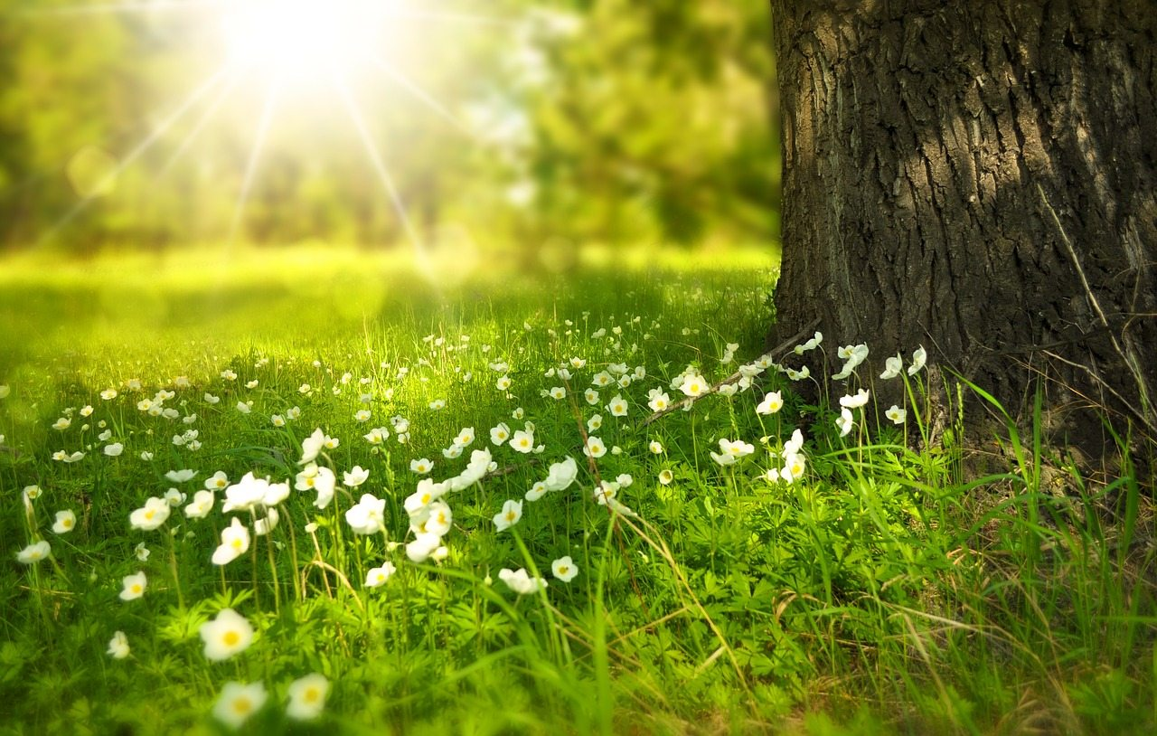 Sermon: The Way, the Truth, and the Life (John 14:1–14)